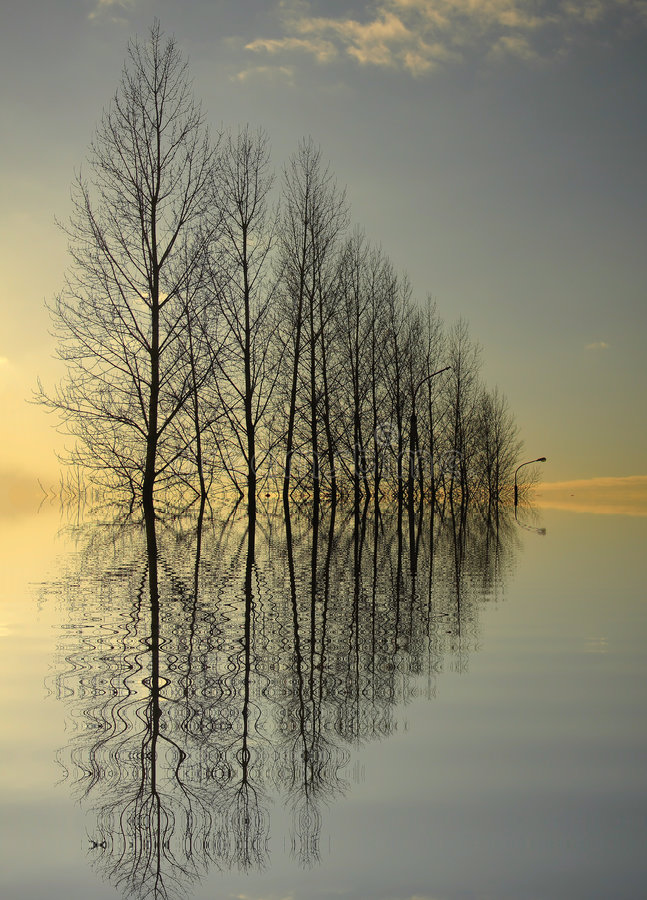 Great Trees Reflection stock photo