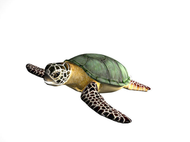 Great Turtle royalty free stock image