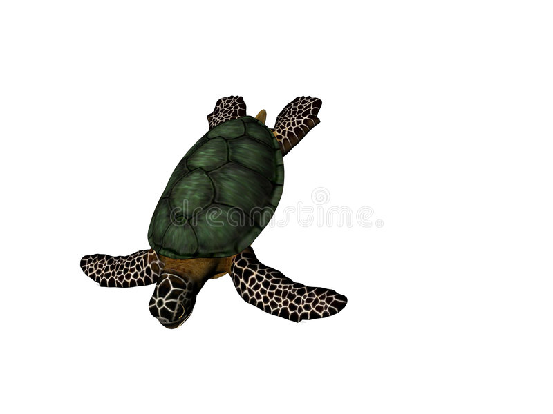 Great Turtle royalty free stock photography