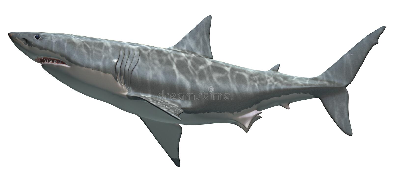 Great White Shark. 3D rendering of a Great White Shark, isolated on white background vector illustration