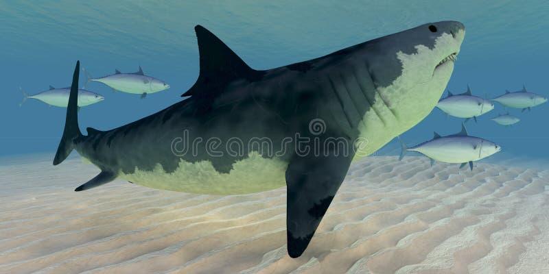 Great White Shark royalty free illustration