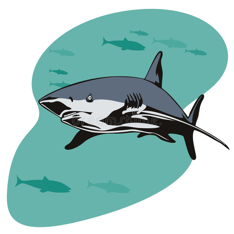 Download Great white shark stock illustration. Image of great, marine - 2853545