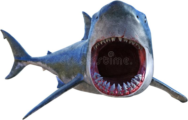 Great White Shark Attack Isolated. Illustration of a great white shark on the attack and ready to bite. Isolated on white, PNG file available stock illustration