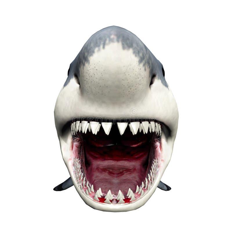 Great White Shark vector illustration