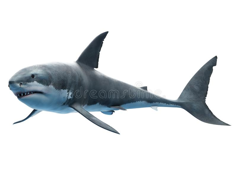 A great white shark vector illustration