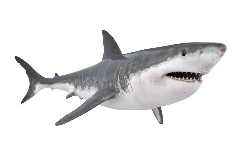 Great White Shark Isolated. On white background. 3D render stock illustration