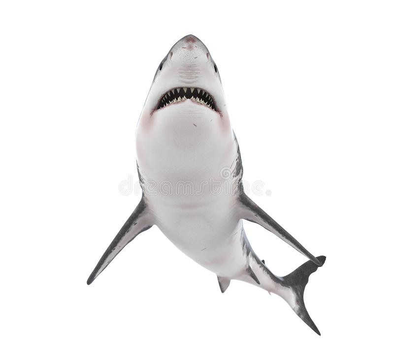 Great White Shark Isolated. On white background. 3D render royalty free illustration