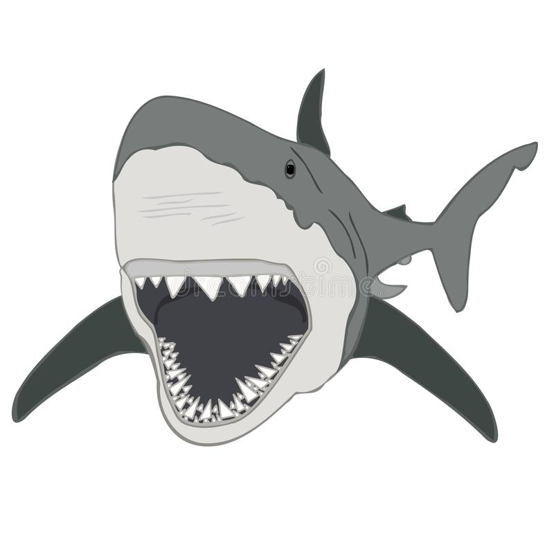 great white shark illustration shark jaws stock photo