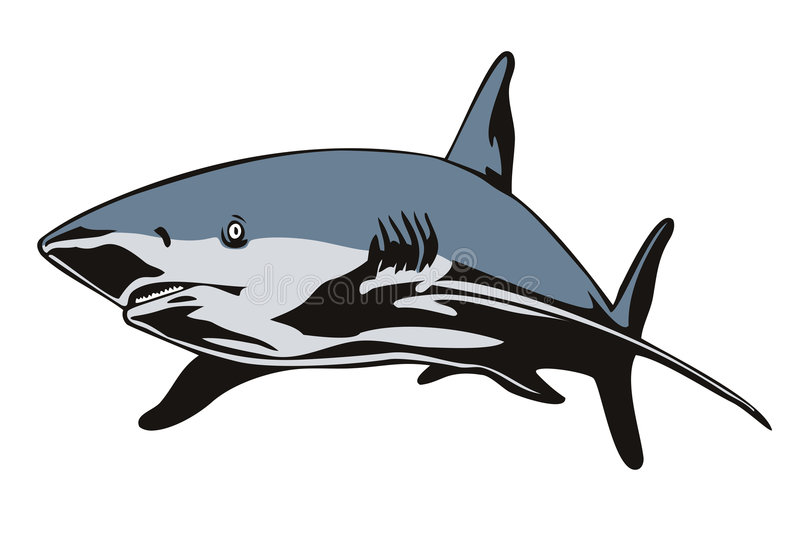 Great white shark on white stock illustration