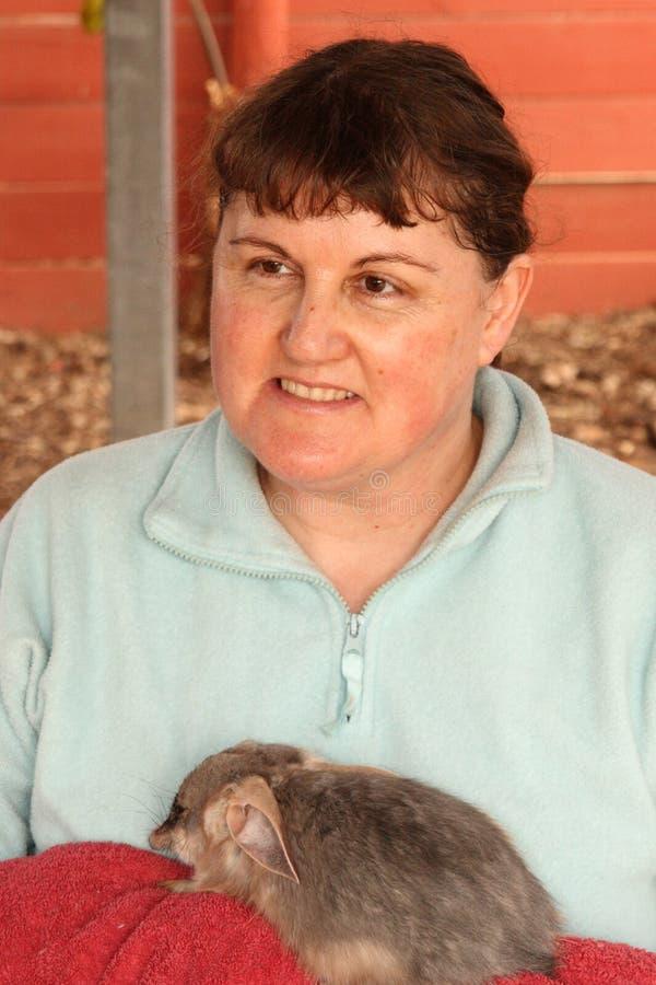 Greater Bilby - Australian native marsupial stock photography