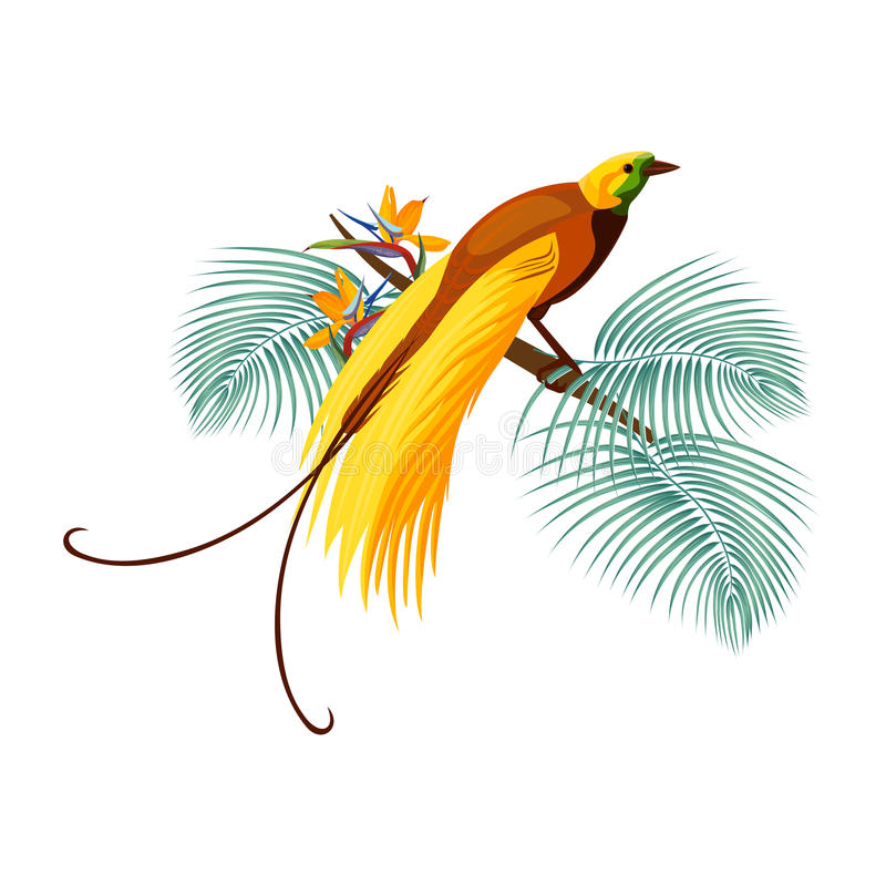 Free Greater Bird-of-paradise With Yellow Tail Sitting On Branch Stock Photography - 91802552