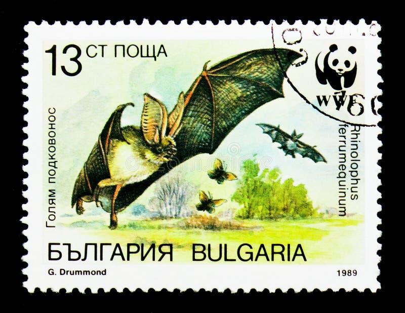 Greater Horseshoe Bat Rhinolophus ferrumequinum, WWF Bats serie, circa 1989 royalty free stock image