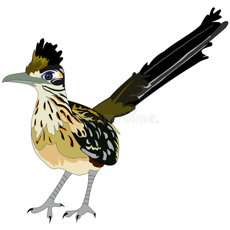 Greater roadrunner bird. Illustration of greater roadrunner bird stock illustration