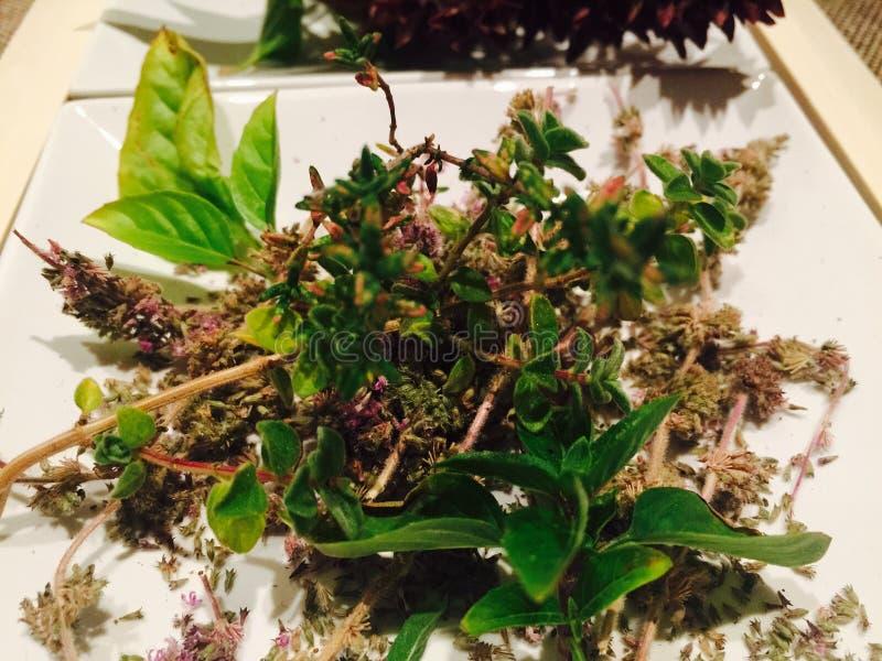 Greccy ziele zdjęcie royalty free