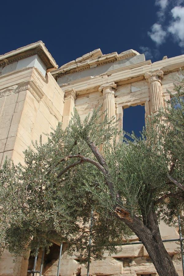 Grecka świątynia i drzewo oliwne zdjęcia stock