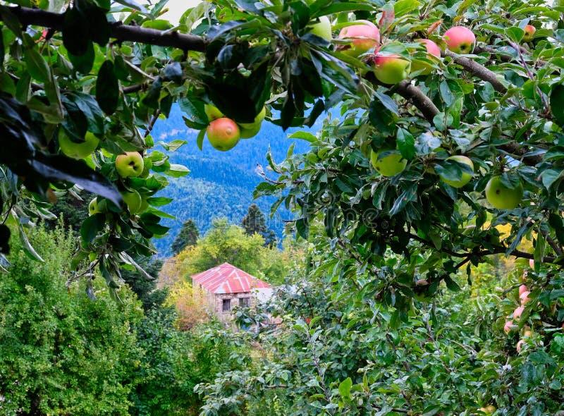Grecka górska wioska Z dojrzeń jabłkami, Grecja zdjęcia stock