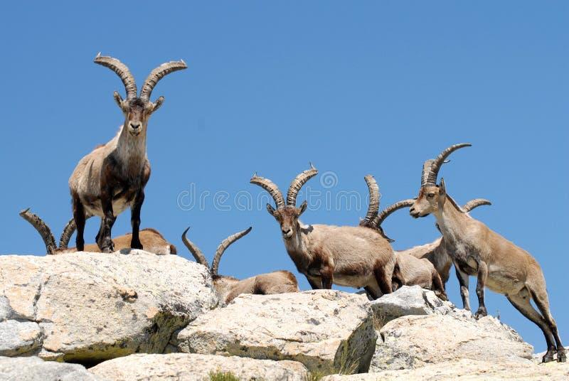 Download Gredos Zdjęcie Royalty Free - Obraz: 18198415