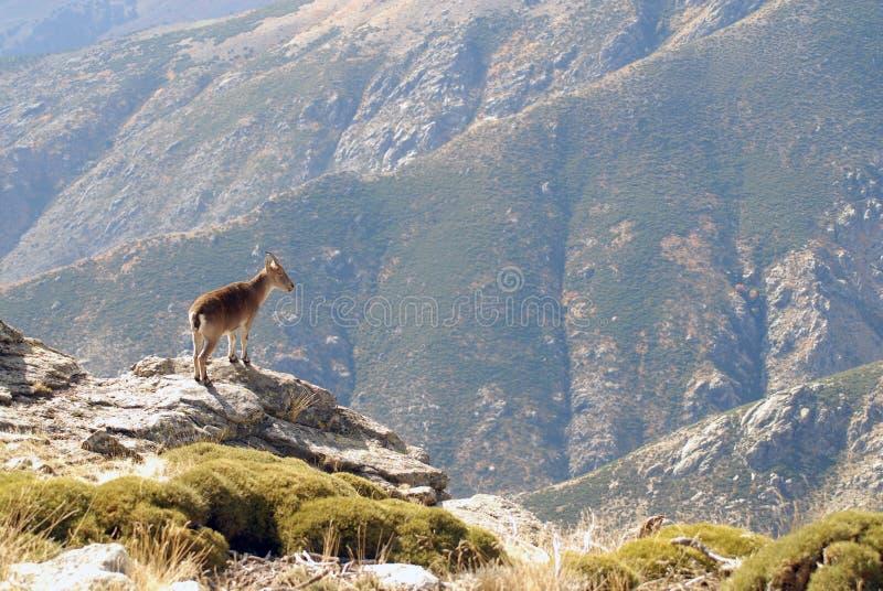 Download Gredos Royalty Free Stock Image - Image: 18199156