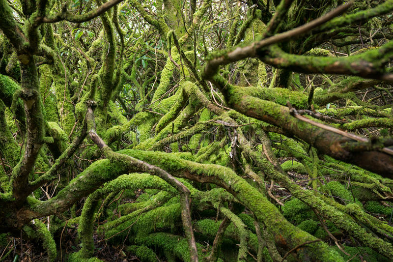 The gree hell. Mossy roots and trunks in deep forest. stock image