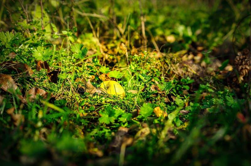Greean-Apfel im Gras lizenzfreie stockfotos