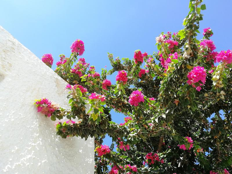 Greece colors royalty free stock photography