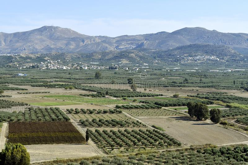 Greece, Crete Island, rural landscape. With fields of olive trees royalty free stock photo