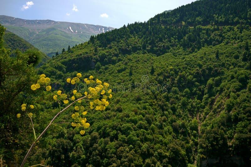 Greece Epirus, Landscape. Greece, Epirus, landscape in Tzoumerka National Park stock photography