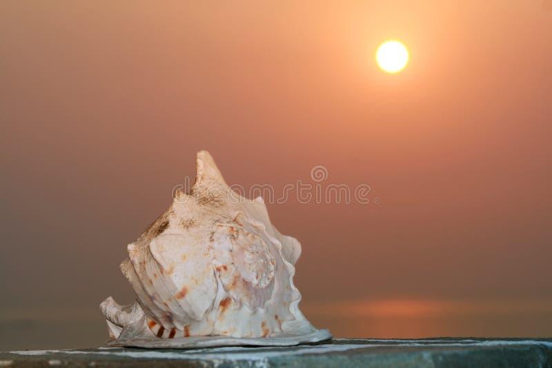 Greece, Seashell imagens de stock
