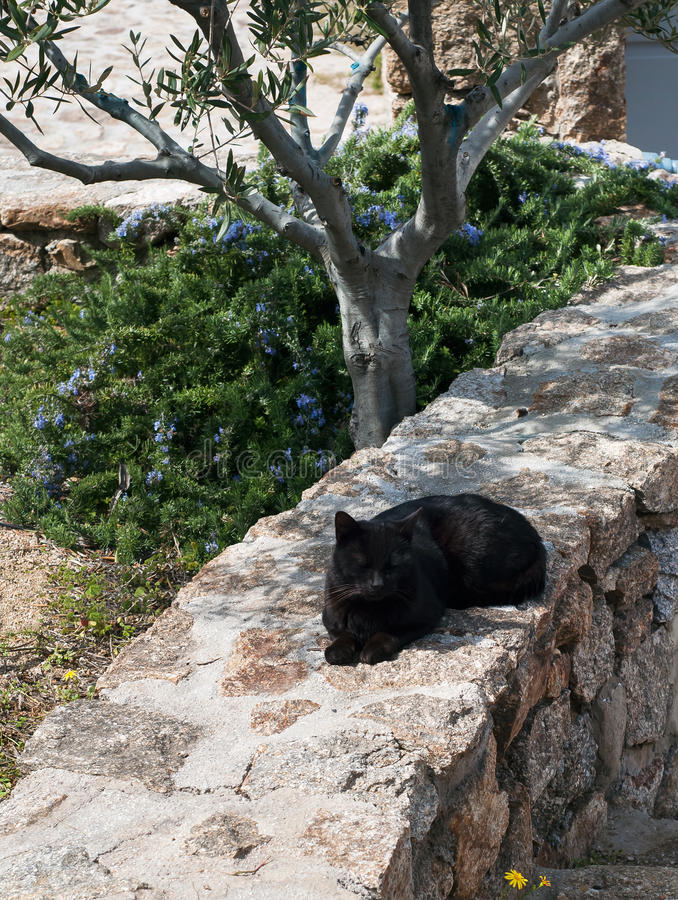 Greek -Black cats - cat sleeping in a garden under the tree. Greek -Black cats cat sleeping in the garden under the tree stock photo