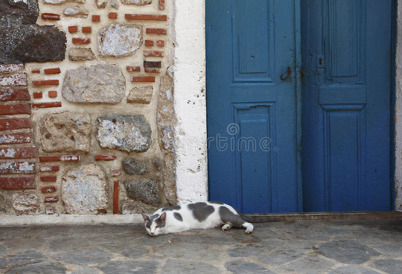 A greek cat royalty free stock photos