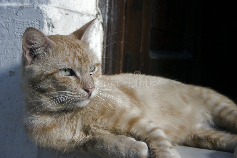 Greek cat. In front of Corfu bar Greece stock images