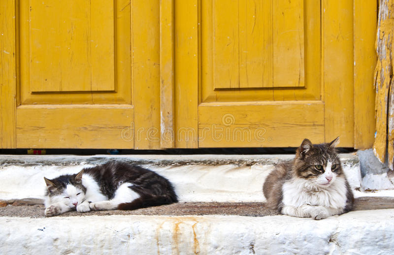 Greek Cats Royalty Free Stock Photography