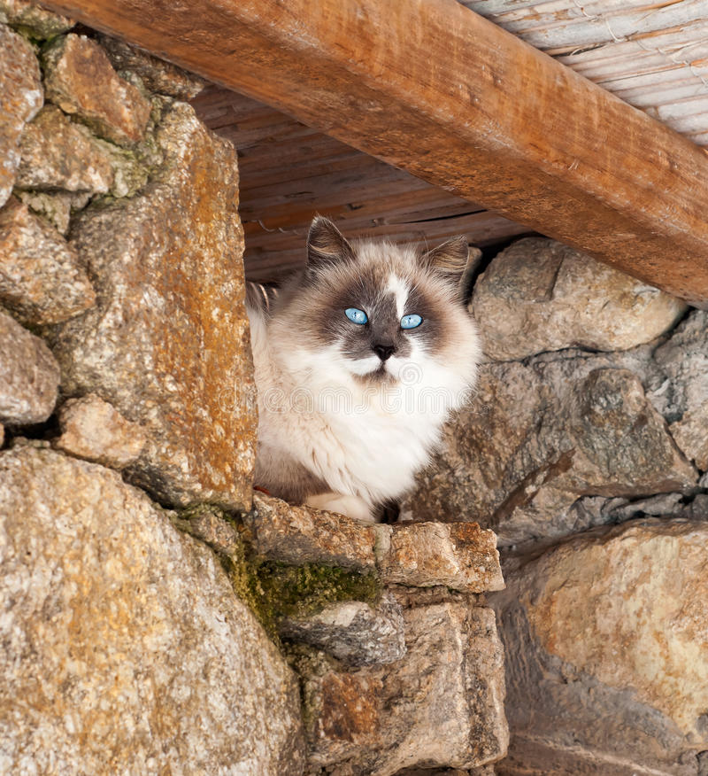 Greek cats - beautiful fluffy cat sits under the roof. Greek cats - beautiful fluffy cat sits under a roof stock photo