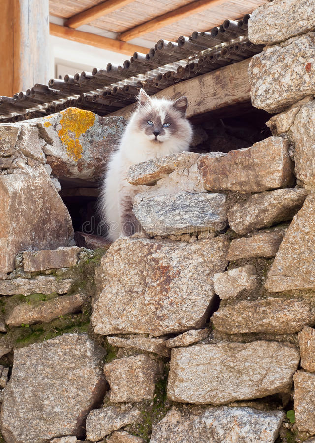 Greek cats - beautiful fluffy cat sits under the roof. Greek cats - beautiful fluffy cat sits under a roof royalty free stock photo
