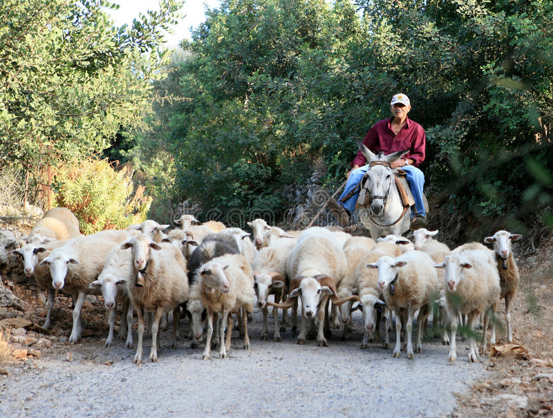Greek Shepherd With Flock And Donkey Editorial Photography