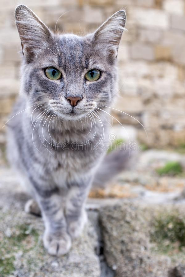 Greek stray cat by the windmills on the harbor of Rhodes island stock photos