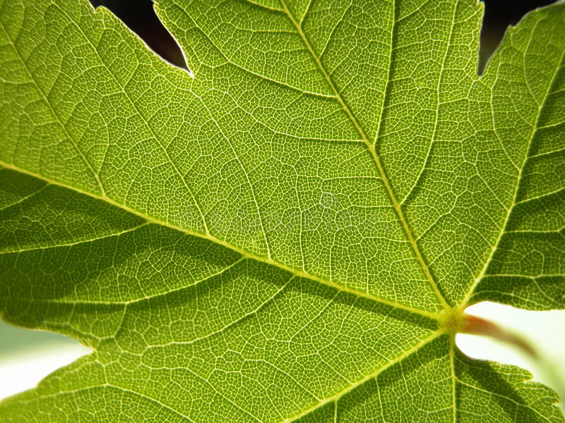 Download Green stock photo. Image of green, texture, details, plants - 186894