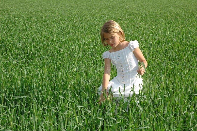 green royaltyfri fotografi