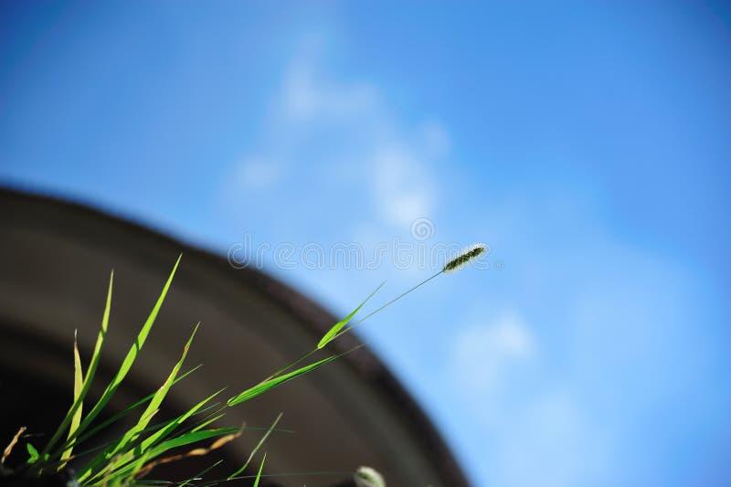 Download Green stock illustration. Image of asia, scenery, sunshine - 26560143
