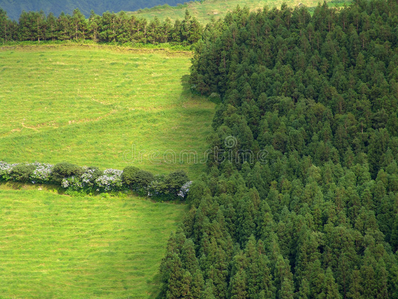 Download Green stock image. Image of green, country, trees, land - 450159