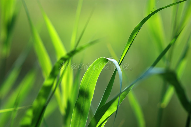 Download Green stock photo. Image of grass, spring, garden, plant - 454460