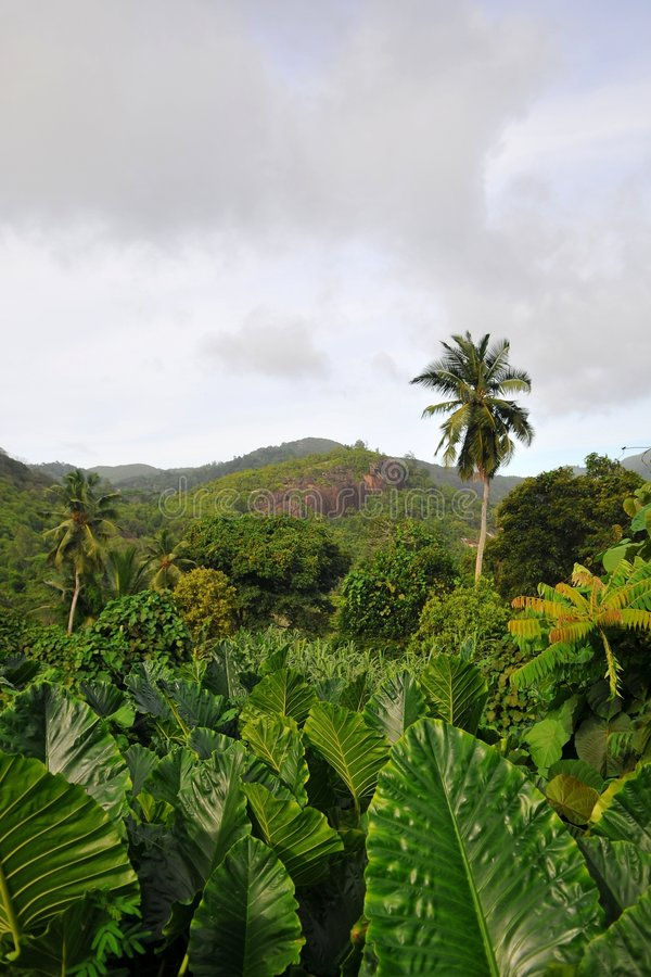Green. Valley in Mahe island, Seychelles stock image