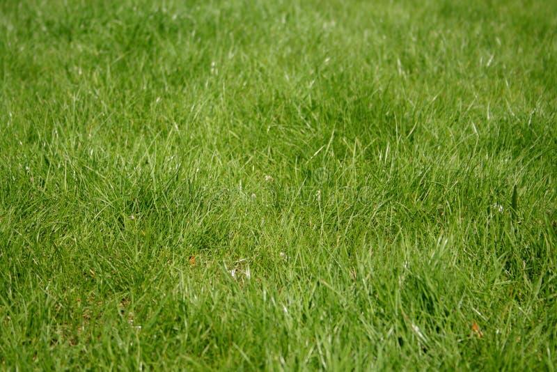 green arkivfoton