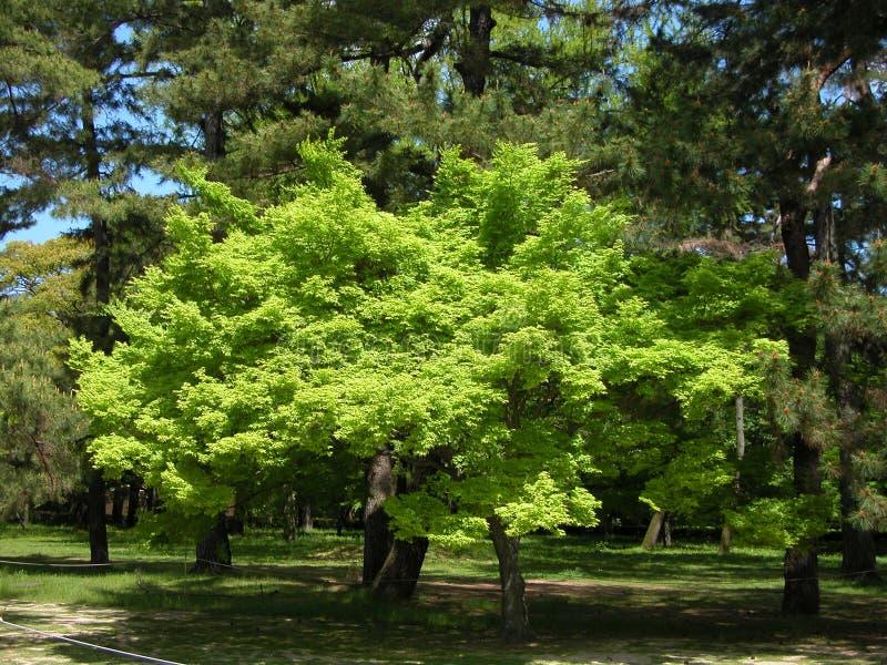 Green Obrazy Stock