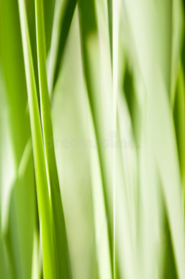 Download Green abstract grass stock image. Image of spring, pattern - 19325479