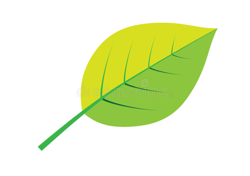 Download Green abstract leave stock illustration. Image of tree - 11265274