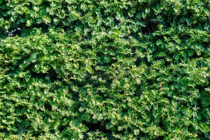 Green abstract wall background, green leaves wall texture stock images