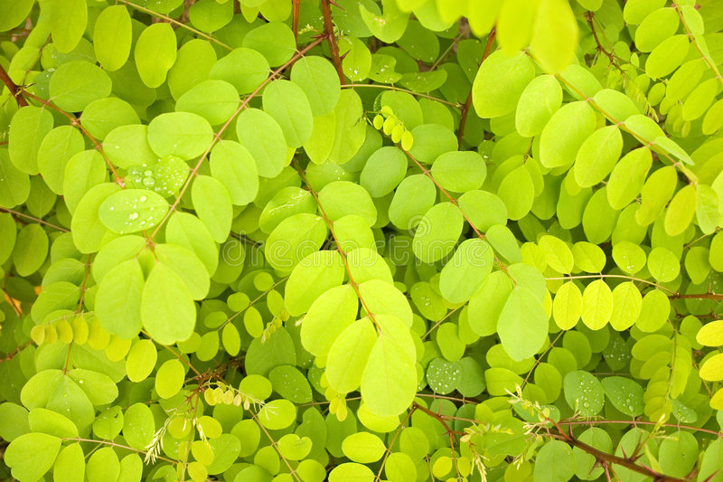 Download Green leaves background stock image. Image of bright, rain - 1623291