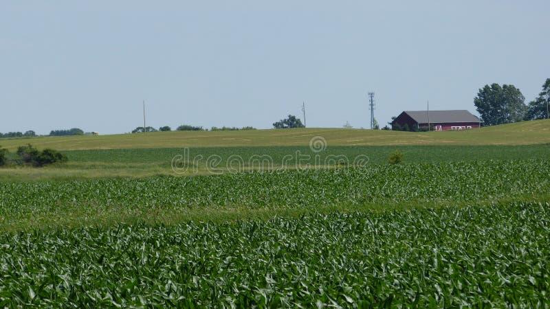 Green Acres. Summertime green acres on the farm royalty free stock photos