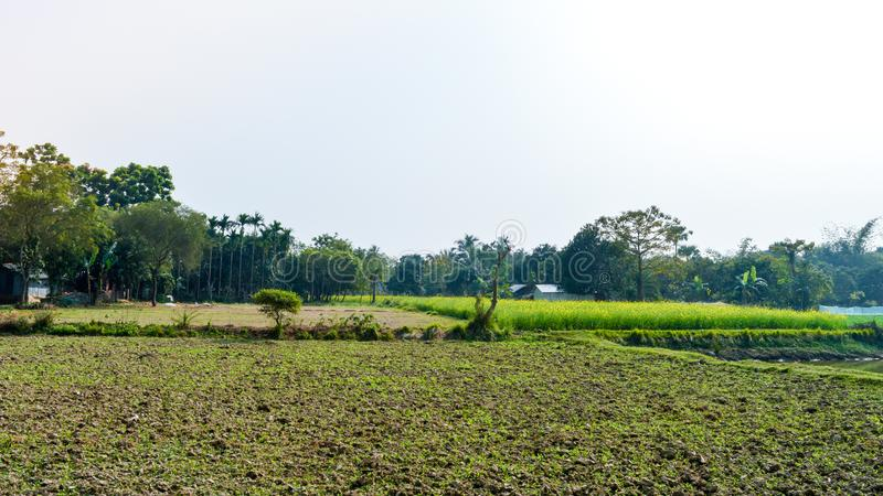 Green agricultural field after harvest. Rice Field After Harvesting at spring season. A scenic natural landscape scenery with royalty free stock images
